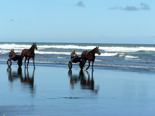Trotters training Kariotahi Beach